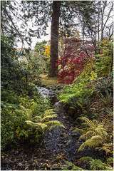Burn (Jistfoties) Tags: dawyckgardens autumn scottishborders botanicgardens landscape canon5d canon24105f4