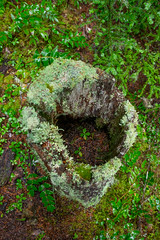 DSCF4385 (LEo Spizzirri) Tags: bevin morgan peter odin huck huckleberry shug cabin northwest seattle forest pacific mushroom moss josh betsy ladder green thick