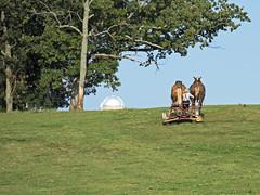 Amish Farmer (Brian E Kushner) Tags: amish mennonite horse buggy farm country farming plow field countryroad road pennsylvania brianekushner nikon d810 nikond810 nikon70200mmf28 70200mm f28 nikor
