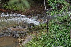 Spring Creek flowing fast Hepburn Mineral Springs Reserve_9533 (gervo1865_2 - LJ Gervasoni) Tags: hepburn springs swiss italian festa 2016 victoria australia history heritage culture celebration tradition mineral reserve