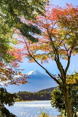 2016 Fuji and autumn leaves (shinichiro*) Tags: åé½çé¡ å±±æ¢¨ç æ¥æ¬ jp 20161103img5614 2016 crazyshin appleiphone7plus iphone fuji 富士 河口湖 lakekawaguchi 大石 fujikawaguchikomachi yamanashi japan 紅葉 30462352950 726385 201703gettyuploadesp