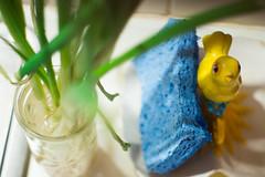 kitchen kitsch (330/366) (severalsnakes) Tags: a502 ks2 missouri pentax saraspaedy sedalia bird ceramic dish figurine onion plant sponge sprout