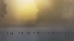 Brumes matinales (liofoto) Tags: canon eos6d sigma70200 brume brouillard fog foggy domainedechantilly chantilly oise france automne autumn otoño oies chevaux cheval eau water levédesoleil sunrise flickrdiamond