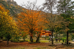Autumn in Yenice (s_gulfidan) Tags: autumn leaves trees nature art painting digitalartpainting saariysqualitypictures 200faves