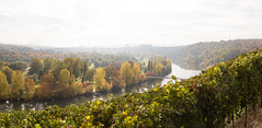 Autumn in Stuttgart, Germany (maxunterwegs) Tags: alemagne alemanha alemania automne autumn badenwrttemberg deutschland germany herbst neckar otoo outono stuttgart vignoble vineyard vinha via badenwrttemberg otoo via