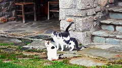 (Love me tender .**..*) Tags: dimitrakirgiannaki photography greece greek cats animals 2016 nikond3100 leonidio arkadia stairs stones xenonashotel november travel