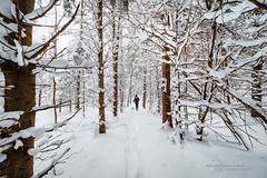 Welcome to Narnia (Thousand Word Images by Dustin Abbott) Tags: photography manualfocus lens woman woods pet dog dustinabbottnet adobelightroomcc 2016 winter thousandwordimages snow review trees alienskinexposurex2 petawawa pembroke canon5d4 fullframe forest canoneos5dmarkiv comparison ontario canada laowa12mmf28zerod hiking adobephotoshopcc photodujour dustinabbott