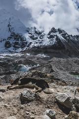 Nap Time (cody.waldon) Tags: basecamp mountains dog scene animals nepal trekking outdoor explore adventure glacier icefall khumbu everest nap sleeping rocky terrain sky cloudy