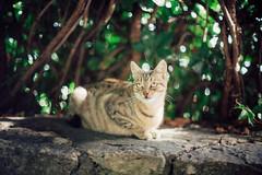 (Just A Stray Cat) Tags: ai nikkor 50mm f12 s film 35mm 35 mm analog manual dof bokeh depth field 50 f12s canon nikon