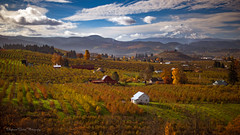 Autumnal Quilt (Stephanie Sinclair) Tags: fall2016 fall autumn farmland oregon volcano mthood clouds hoodriveroregon fruit fruitloop trees barn