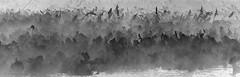Marsh Mist Rising Monochrome (Laurie-B) Tags: america american freestate md maryland northamerica northamerican oldlinestate princegeorgescounty submitteddpca20161121challengeimpresionistic usa unitedstatesofamerica westernshore