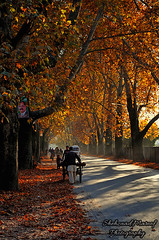Shades Of Autumn (Shehzaad Maroof Khan) Tags: chinar road abbottabad autumninpakistan ontheroad nature walk path khyberpakhtunkhwa pakistan