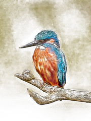 Kingfisher - Pencildrawing by www.andreasdidion.de (photography.andreas) Tags: animals art digitalart fineart graphicdesign hintergrund illustration pencildrawing print sketch tierzeichnung weiser weiserhintergrund zeichnung artistsontumblr background drawing graphicdesigner linedrawingstockimages pencil white whitebackground kingfisher