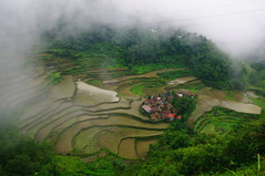 Bangaan Village, Rice Terraces, Cordilleras, Ifugao, Northern Luzon, Philippines (ARNAUD_Z_VOYAGE) Tags: islands island philippines landscape boat sea southeast asia city people volcano amazing asian moutains sunset street action cars jeepney tricycle architecture river tourist capital town municipality baguio northern luzon filipino filipina colors building house provincial province village batad rice terraces cordilleras ifugao unesco world heritage altitude mountain mountains field