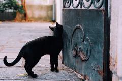 (Berill Sándor Photography) Tags: summer black cute film cat photography photo july croatia analogue krk 2015 analóg