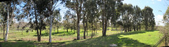 Panorama from the back fence to the creek (spelio) Tags: house home moving move aug 2015 gnunnawal
