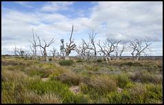 Lake Menindee dried up-1= (Sheba_Also 11,000,000 + Views) Tags: lake up dried menindee
