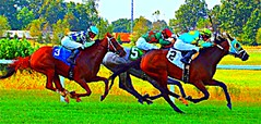 50. Interpretation of a Painting - 115 pictures in 2015 (Krasivaya Liza) Tags: horse franklin kentucky ky racing 50 kentuckyderby leroyneiman kentuckydowns 115picturesin2015 interpretationoffamouspainting