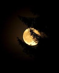 Moonlight Greenhall Park Blantyre (James B Brown) Tags: lanarkshire blantyre
