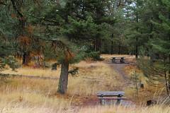 Fall Colors at the Anarchist Mountain Rest Area (tonywild241) Tags: autumn canada tree nature forest landscape fallcolor britishcolumbia foliage grassland mostviewed okanaganbc