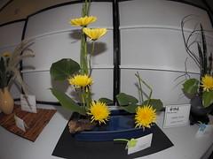 "Horsetail, Monstera Leaves & Chrysanthemum by Jenny Nagel ""Koryu School"" (nano.maus) Tags: fisheye lauritzengardens japaneseflowerarrangement omahabotanicalsociety japaneseambiencefestival"