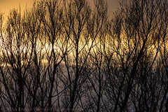 Sunset through the trees (mistagain1 (Working away catch up soon)) Tags: uk november autumn sunset england river evening nikon somerset gb endoftheday 2015 parrett huntspillriver d7200