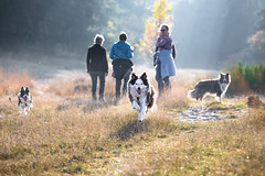 Walking the Dogs (Bas Bloemsaat) Tags: dogs nature sheepdog bordercollie walkies