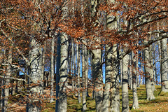 only trees (picturesbywalther) Tags: autumn trees wallpaper fall nature forest background herbst wald bäume baum muster