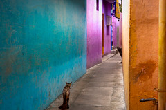 Alleyway. Mahabalipuram, India (Marji Lang Photography) Tags: street travel blue people orange dog pets india color colors animal animals yellow cat alley colorful turquoise indian streetphotography nopeople domestic alleyway simplicity colourful minimalism tamilnadu mahabalipuram straycat mamallapuram complementarycolors streetdog travelphotography republicofindia twoanimals ef247028l indiansubcontinent streetanimals  canoneos5dmarkii travelanddocumentaryphotography  marjilang coloratmosphere