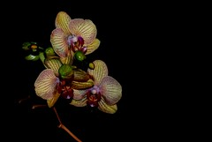 (oeiriks) Tags: flower oeiriks sonyalpha350