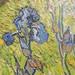 Vincent Van Gough - Iris - national gallery of canada 081