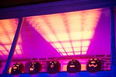 KMM_3008 (K_Marsh) Tags: jackolantern pumpkins westchestercounty crotononhudson thegreatjackolanternblaze