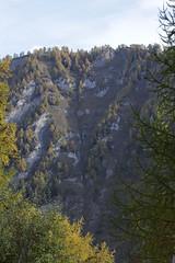Larches in autumn (Bjrn S...) Tags: autumn forest schweiz switzerland suisse svizzera larch larice wallis valais lrche europeanlarch larixdecidua mlze europischelrche laricecomune mlzedeurope mlzecommun alerceeuropeo tourdugrandchavalard pindebrianon lrice