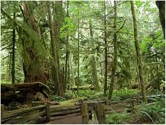 MacMillan-Park_Nanaimo_Victoria-(24) (F. Ovies) Tags: canada montaas rocosas