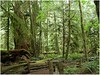 MacMillan-Park_Nanaimo_Victoria-(24) (F. Ovies) Tags: canada montañas rocosas
