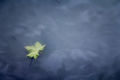 Vacuo (Pirata Larios) Tags: verde hoja canon gris agua noviembre dslr 2012 flotando 60d carloslarios