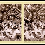 JAPANESE SCHOOL GIRLS STUDY UNDER THE GNARLED  PINES SURROUNDING THE IMPERIAL PALACE MOAT in Old TOKYO, JAPAN thumbnail