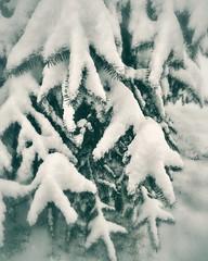 12558261_505758429594988_1398188318_n (dragica_basaric) Tags: winter snow wonderland magic magical snowy flake nature green colours streets treet postcar postcards love train phot january 03 2016 photo photography d b danchy92 dragicabasaric lapovo serbia srbija srb sumadija dbphotography