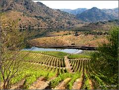 Landscape (Eduardo Voar Alto) Tags: landscape vineyards mountains water lake trees cabin