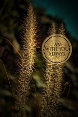 Always with you (HI-RES Free) (Bible Verse Photo) Tags: am with you always amtthew 28 20 2820 new testament fountain grass tortolita mountain park arizona marana oro valley tucson seed jesus god christian free creative commons vertical hires high resolution bible verse scripture newtestament wild burro trail dove mountian
