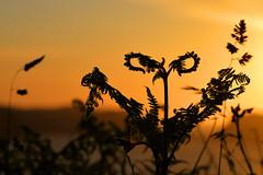 atardecer (puzzlero) Tags: atardecer sunset contraluz puzzlero