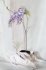 Wisteria (Bev-lyn) Tags: wisteria flower stilllife purple