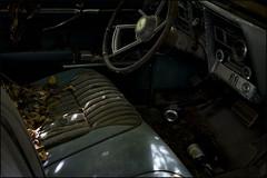 Forgotten (Dottie316) Tags: steering wheel horn door seet leaves radio car window wires brake gasfoot bottle can garbage