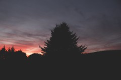 sunsetting (ConcreteLies) Tags: sunset sunsetting clouds pink blue purple skyscape tree mountain