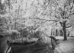 (Attila Pasek) Tags: koodr72 nikond600 oxford infrared longexposure longexposuretime park path stream tree