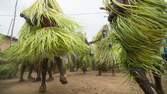 Agbogbo-Za Festival, Nots (peace-on-earth.org) Tags: regionplateaux tgo togo geo:lat=694145733 geo:lon=117231667 geotagged nots africa agbogboza festival ewe peaceonearthorg