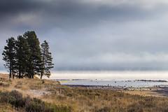 la orilla lago (Christian Collins) Tags: yellowstone lake lago orilla shore morning t2i canon ef70200mm