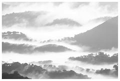 Lienzo_BN (Blaka) Tags: fine art fineart beauxarts landscape nature naturaleza fog