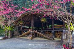 Harry_31359,,,,,,,,,,,Formosan Aboriginal Culture Village,Nantou (HarryTaiwan) Tags:           formosanaboriginalculturevillage nantou        harryhuang   taiwan nikon d800 hgf78354ms35hinetnet adobergb