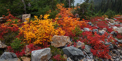 Fall colors along the trail to Easy Pass (keithc1234) Tags: fallcolors easypass hiking northcascades landscape